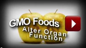 GMO Alters Organ Function