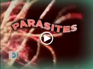 dr-oz-parasites-get-rid-of-your-parasites-the-best-colon-cleanse