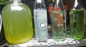 phycopermaculture-2-home-scale-micro-algae-curation-spirulina-chlorella-haematococcus